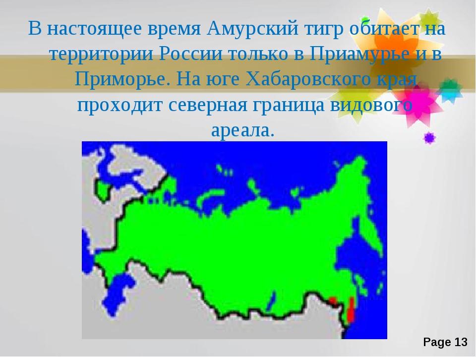 В настоящее время Амурский тигр обитает на территории России только в Приамур...