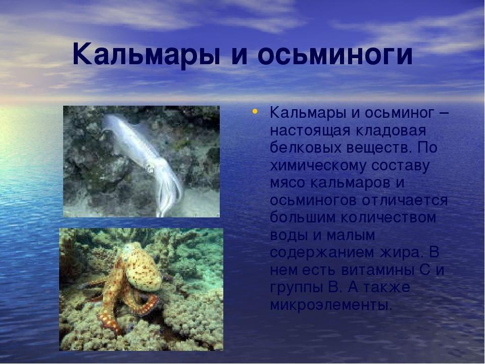 Кальмары и осьминоги Кальмары и осьминог – настоящая кладовая белковых вещест...