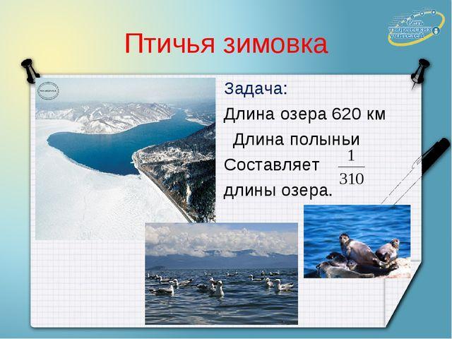 Птичья зимовка Задача: Длина озера 620 км Длина полыньи Составляет длины озера.