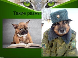 Такие разные собаки…