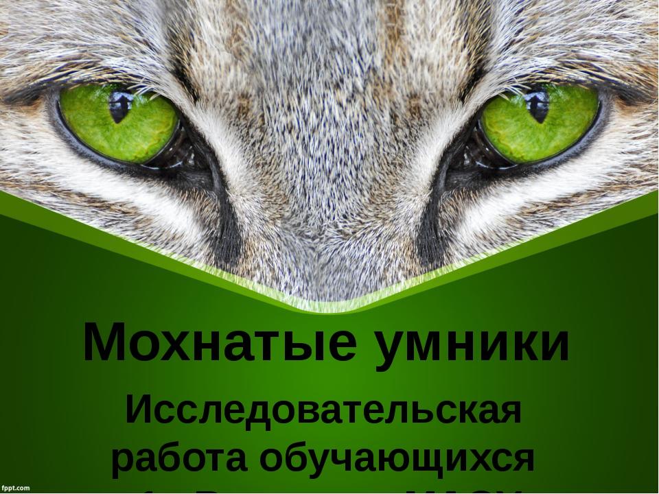 Мохнатые умники Исследовательская работа обучающихся 1 «В» класса МАОУ СОШ №...