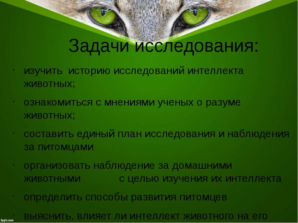 Задачи исследования: изучить историю исследований интеллекта животных; ознако...