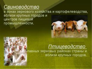 Свиноводство в зонах зернового хозяйства и картофелеводства, вблизи крупных г