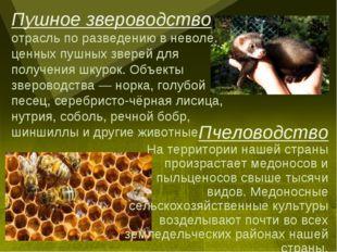 Пчеловодство На территории нашей страны произрастает медоносов и пыльценосов
