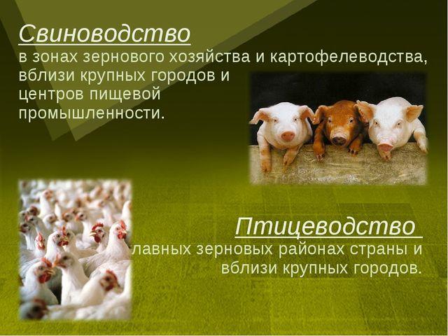 Свиноводство в зонах зернового хозяйства и картофелеводства, вблизи крупных г...