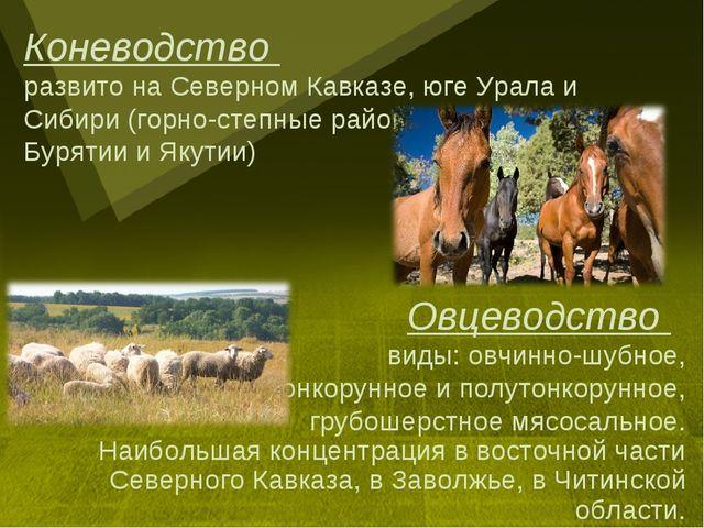 Овцеводство виды: овчинно-шубное, тонкорунное и полутонкорунное, грубошерстно...