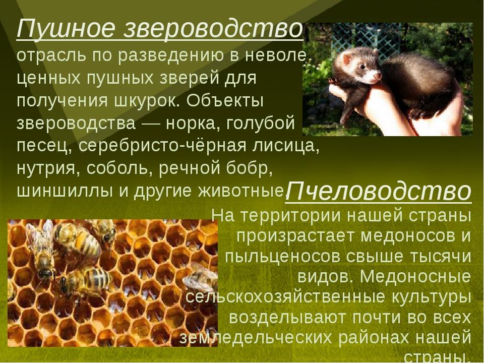 Пчеловодство На территории нашей страны произрастает медоносов и пыльценосов...