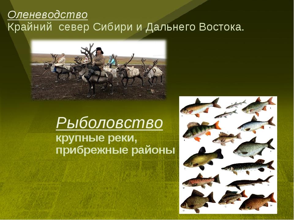 Оленеводство Крайний север Сибири и Дальнего Востока. Рыболовство крупные рек...