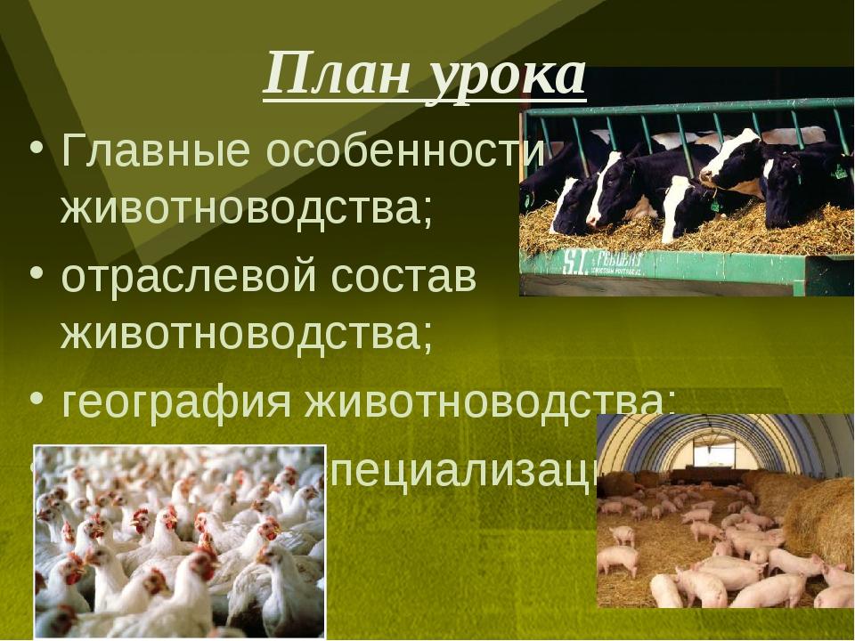 План урока Главные особенности животноводства; отраслевой состав животноводст...