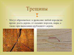 Могут образоваться в древесине любой породы во время роста дерева, от сильных