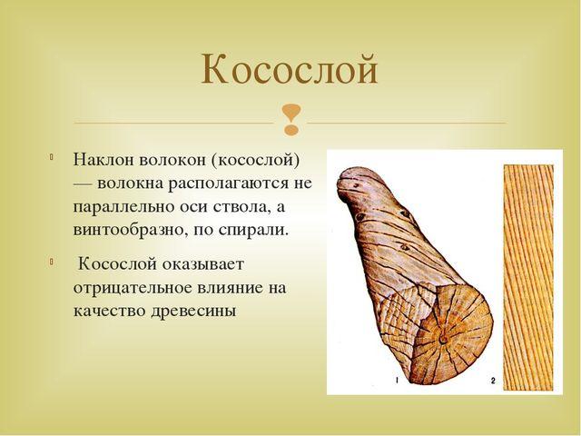 Наклон волокон (косослой) — волокна располагаются не параллельно оси ствола,...