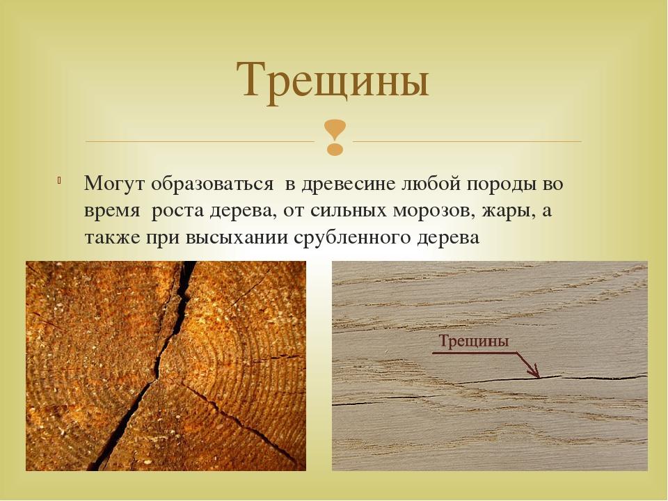 Могут образоваться в древесине любой породы во время роста дерева, от сильных...