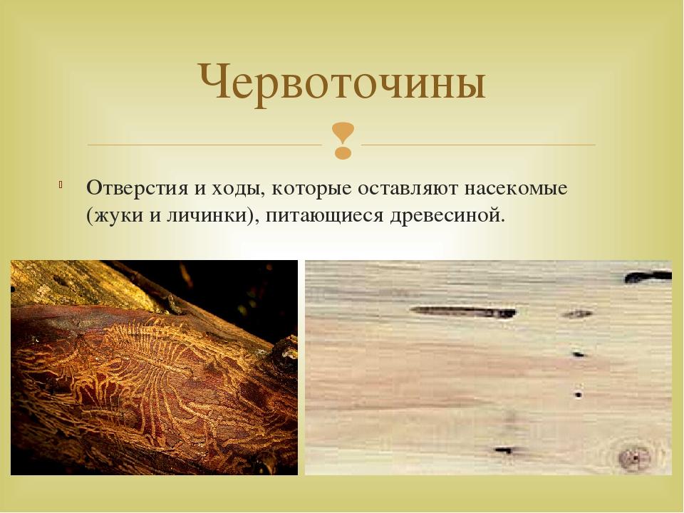 Отверстия и ходы, которые оставляют насекомые (жуки и личинки), питающиеся др...