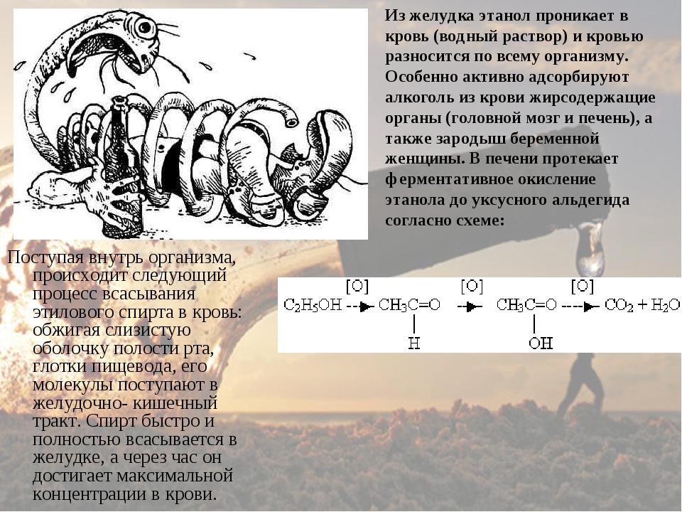 Поступая внутрь организма, происходит следующий процесс всасывания этилового...