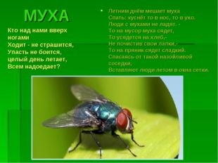 МУХА Летним днём мешает муха Спать: куснёт то в нос, то в ухо. Люди с мухами