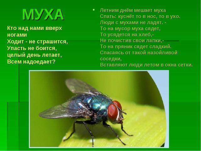 МУХА Летним днём мешает муха Спать: куснёт то в нос, то в ухо. Люди с мухами...