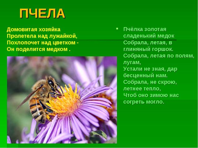 ПЧЕЛА Пчёлка золотая сладенький медок Собрала, летая, в глиняный горшок. Со...