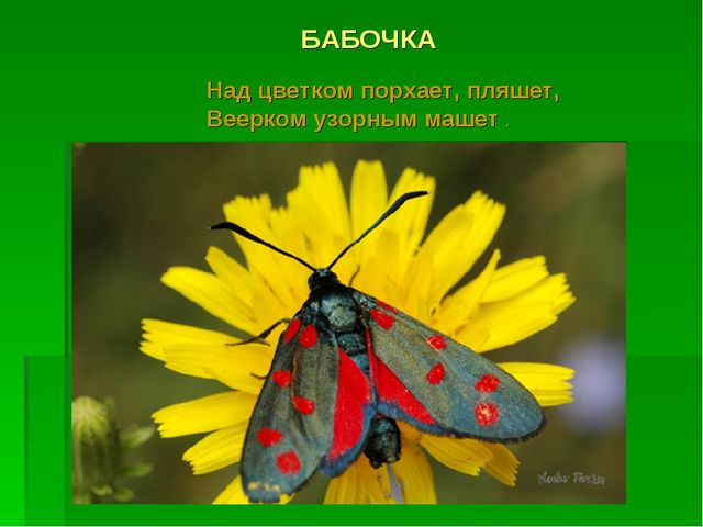БАБОЧКА Над цветком порхает, пляшет, Веерком узорным машет .
