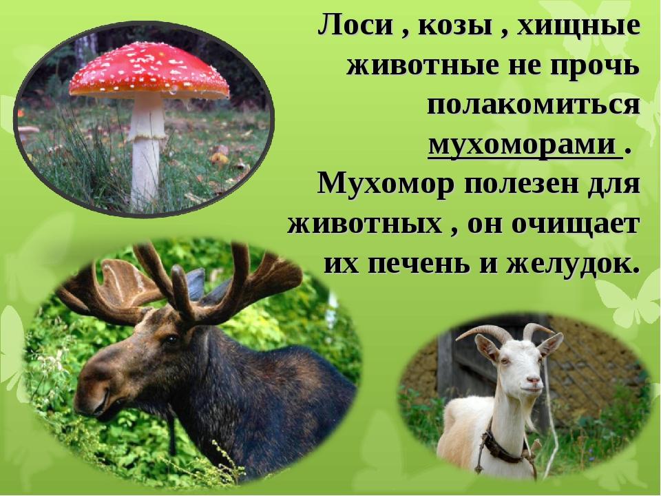 цены какие животные едят мухоморы Путина