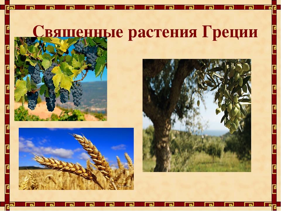 Священные растения Греции