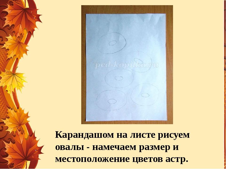 Карандашом на листе рисуем овалы - намечаем размер и местоположение цветов ас...