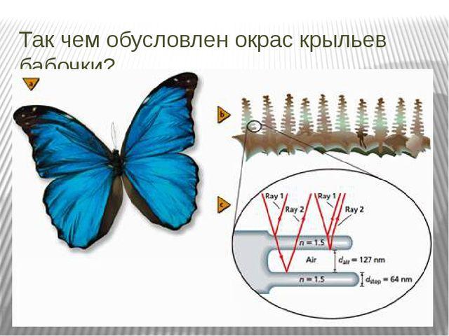 Так чем обусловлен окрас крыльев бабочки?
