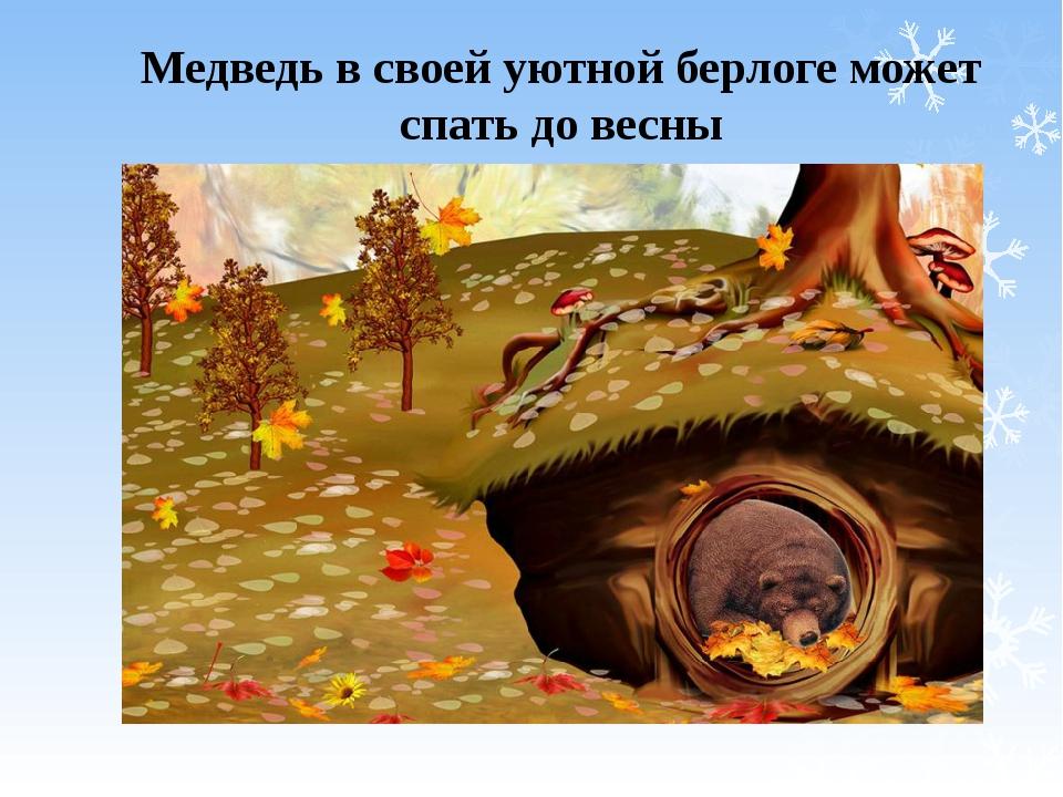 Медведь готовится к зиме картинки для детей