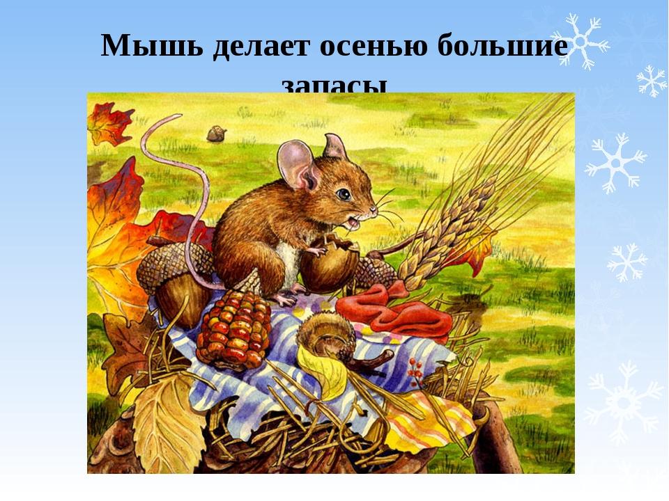 было осень картинки животные готовятся к зиме угадавшим можно