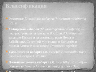 Различают 5 подвидов кабарги (Moschusmoschiferus)[2][3]: Сибирская кабарга (M