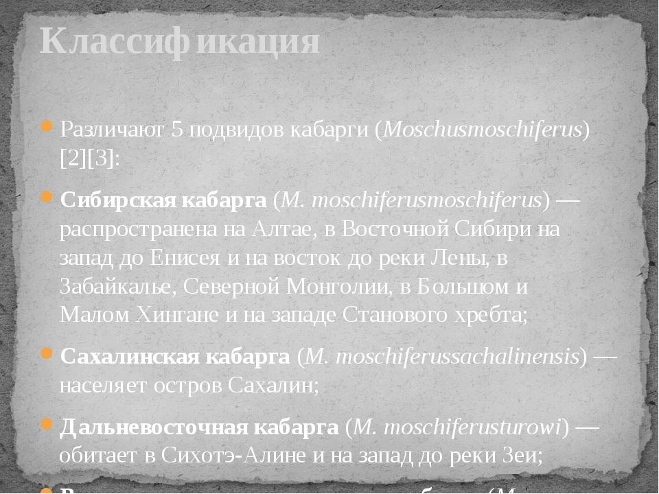 Различают 5 подвидов кабарги (Moschusmoschiferus)[2][3]: Сибирская кабарга (M...