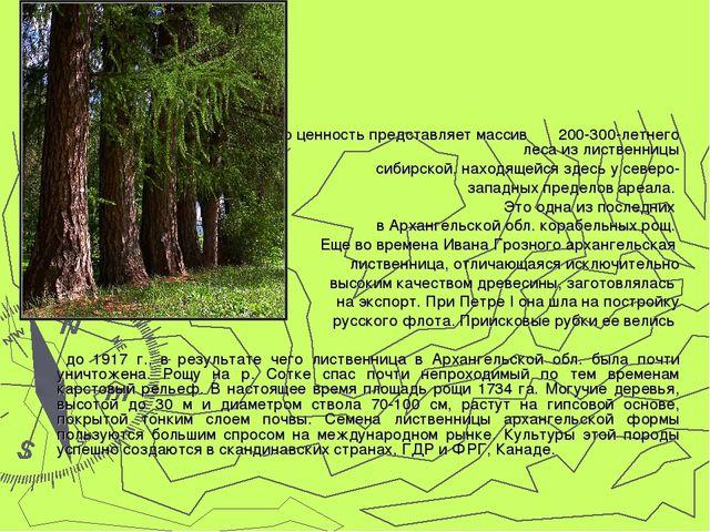 Особую ценность представляет массив 200-300-летнего леса из лиственницы сиби...