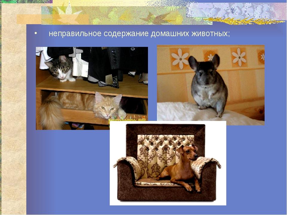 неправильное содержание домашних животных;