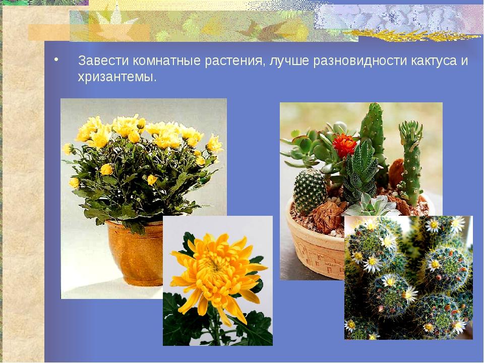 Завести комнатные растения, лучше разновидности кактуса и хризантемы.