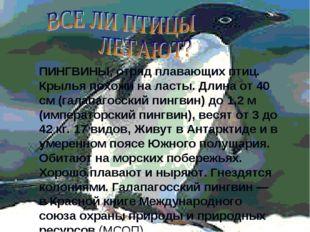 ПИНГВИНЫ, отряд плавающих птиц. Крылья похожи на ласты. Длина от 40 см (галап