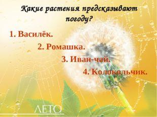 Какие растения предсказывают погоду? 1. Василёк. 2. Ромашка. 3. Иван-чай. 4.