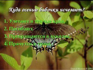 Куда осенью бабочки исчезают? 1. Улетают в теплые края. 2. Погибают. 3. Превр