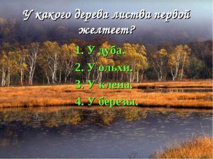 У какого дерева листва первой желтеет? 1. У дуба. 2. У ольхи. 3. У клена. 4.
