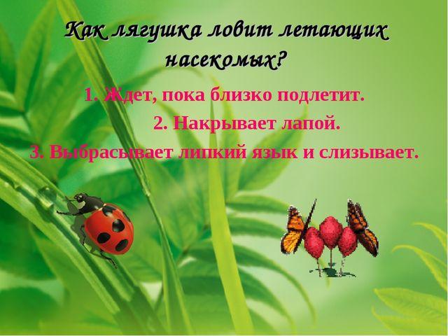 Как лягушка ловит летающих насекомых? 1. Ждет, пока близко подлетит. 2. Накры...