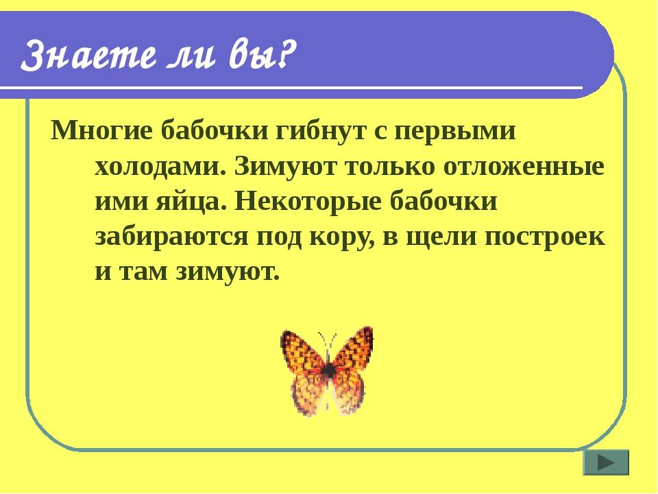 Знаете ли вы? Многие бабочки гибнут с первыми холодами. Зимуют только отложен...