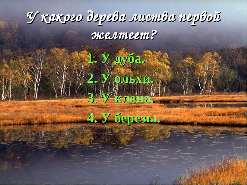 У какого дерева листва первой желтеет? 1. У дуба. 2. У ольхи. 3. У клена. 4....