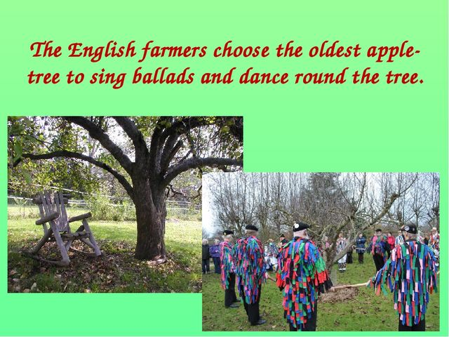 The English farmers choose the oldest apple-tree to sing ballads and dance r...