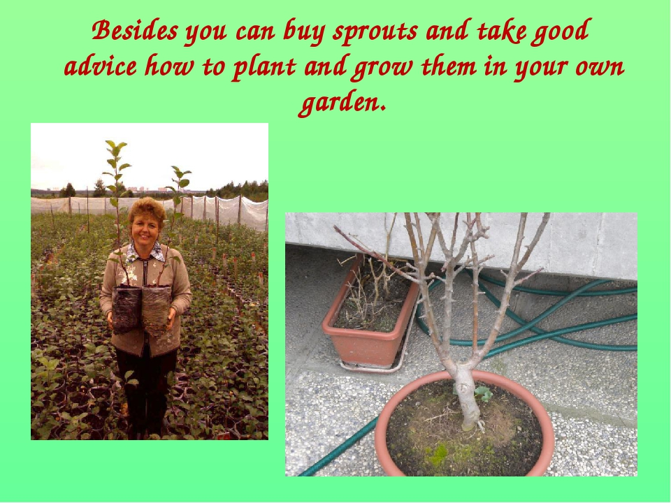 Besides you can buy sprouts and take good advice how to plant and grow them...