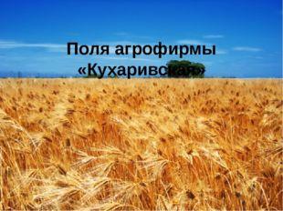 Поля агрофирмы «Кухаривская»