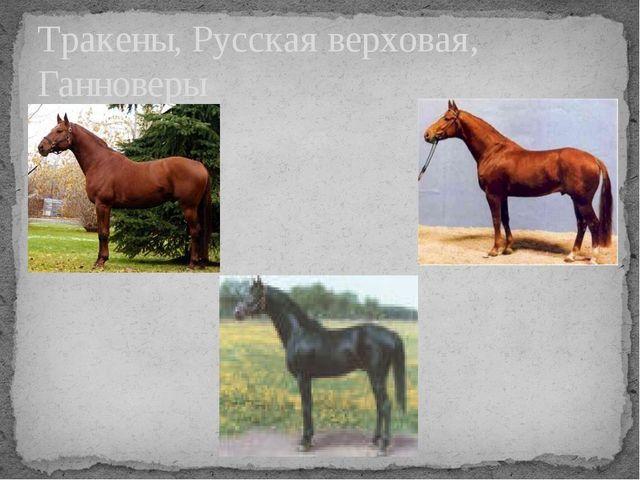 Тракены, Русская верховая, Ганноверы