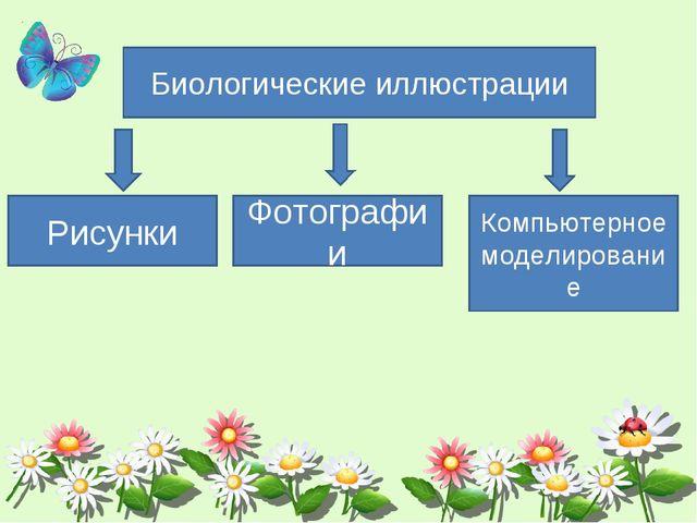 Биологические иллюстрации Рисунки Фотографии Компьютерное моделирование