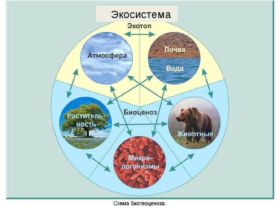 Экосистема