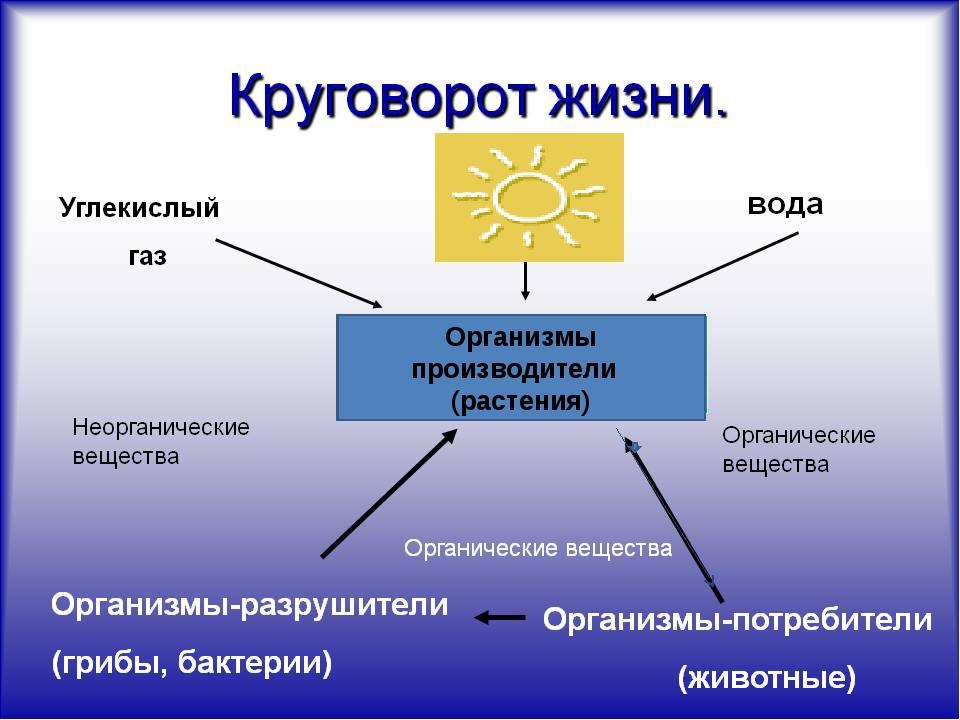 Организмы производители (растения)