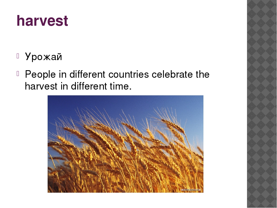 harvest Урожай People in different countries celebrate the harvest in differe...