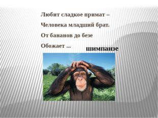 Любит сладкое примат – Человека младший брат. От бананов до безе Обожает ...