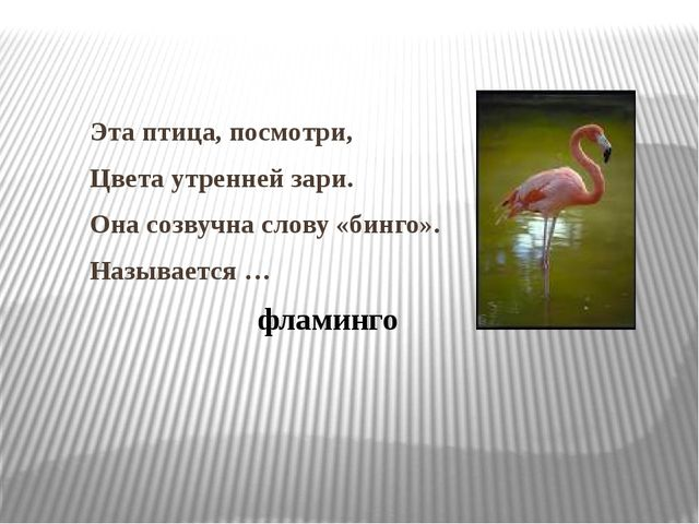 Эта птица, посмотри, Цвета утренней зари. Она созвучна слову «бинго». Называе...